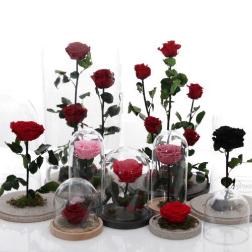 Αποχυμωμένα Άνθη